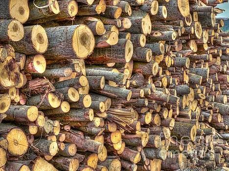Piled Wood by Alfredo Rodriguez