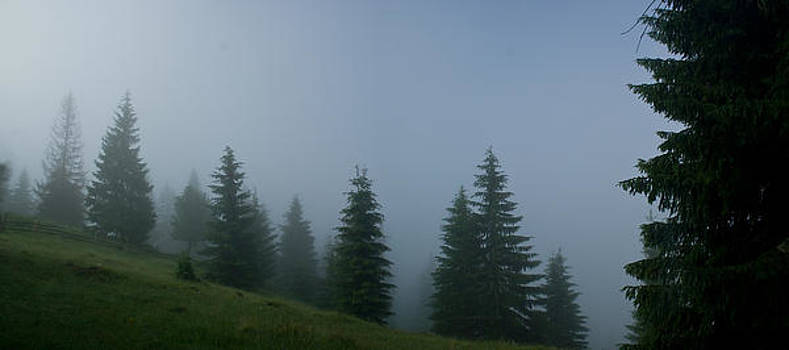 Pine in the mist by Muntean Micu Mihai George