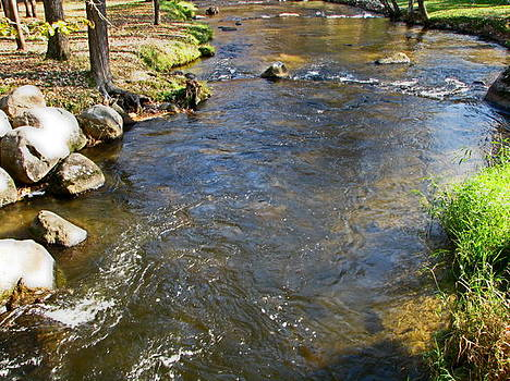 Pine River by Victoria Sheldon