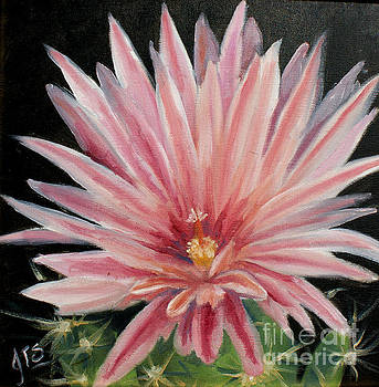 Pink cactus flower by Jean Turner Smith