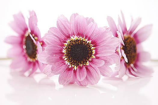 Pink gems by Debbie Dee