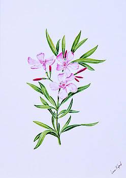 Pink Oleander.  116 by Louis Mifsud