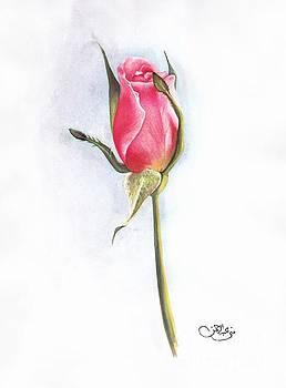 Pink Rose by Muna Abdurrahman