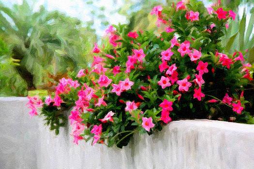 Pink Vines by Carol Kinkead
