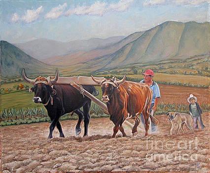 Ploughing in Ocotlan by Judith Zur