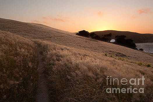 Point Reyes Field in Summer by Matt Tilghman