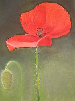 Poppies by Catherine Dewulf