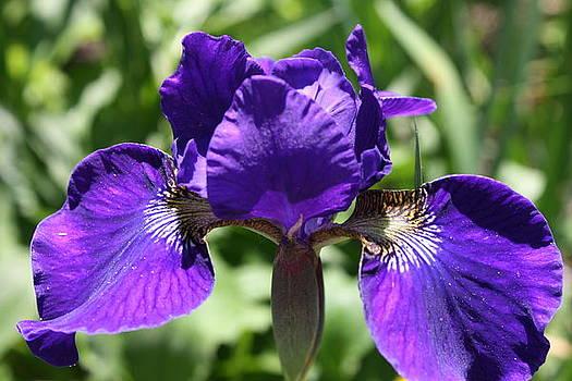 Purple Beauty by Devon Stewart