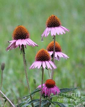 Purple Coneflowers and Raindrops by Theresa Willingham