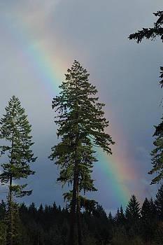 Rainbow Behind Tree by Wanda Jesfield