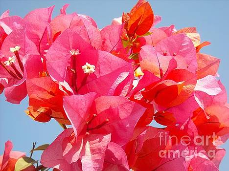 Red Bougainvilla Against the Sky by Liliana Ducoure