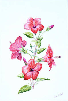 Red Hibiscus. 141 by Louis Mifsud