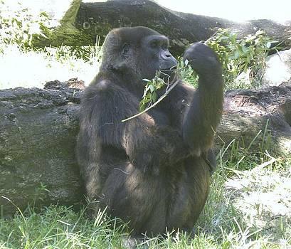 Relaxing Gorilla by Anna Baker