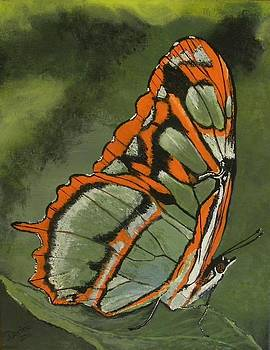 Resting Butterfly by Denise Hills