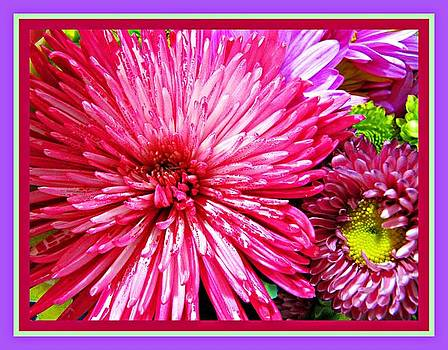 Riot of Color by Pam Utton