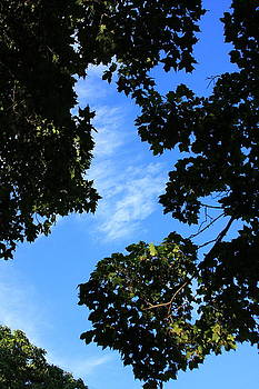 River of Blue Sky by Lyle Hatch