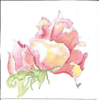 Roses by Nancy Nuce