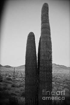 Saguaro's Eve by Van Schipper