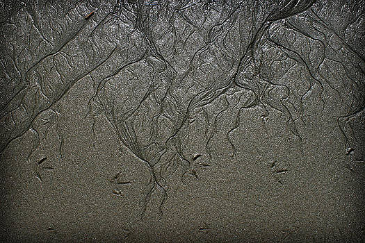Sand Textures by Shane Rees