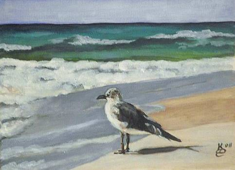 Seagull by Kim Selig