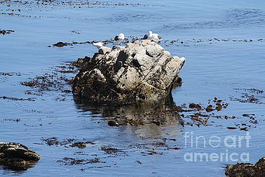Seagulls by Lea Cypert