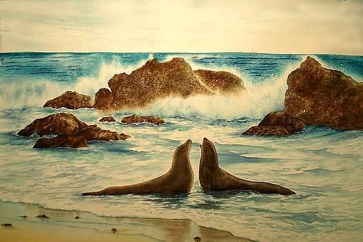 Seals by Arlene Davidson