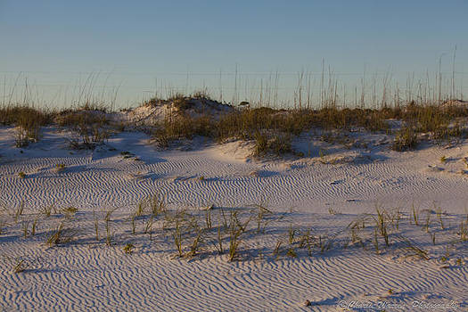 Seaside Dunes 4 by Charles Warren