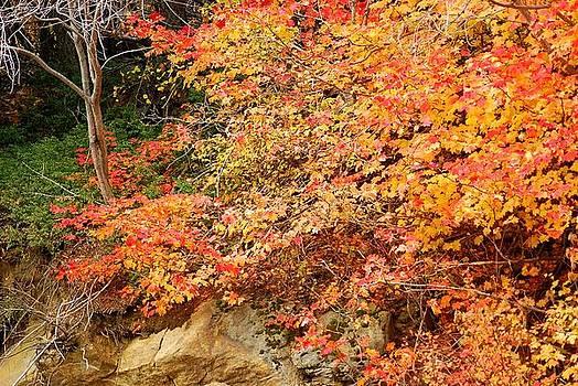 Shades of Fall by Wanda Jesfield