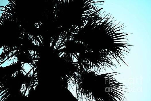 Silhouette by Kim Pascu
