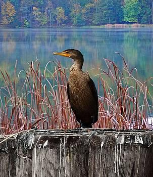 Sitting Pretty by Rick Davis