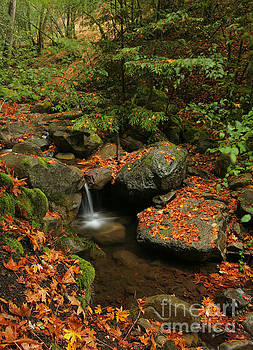 Small Autumn Waterfall by Matt Tilghman