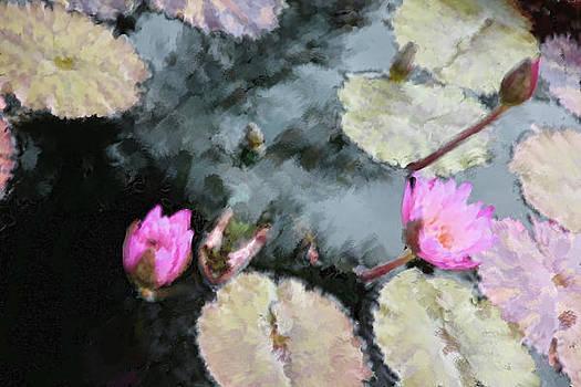 Small Wonders by Carol Kinkead