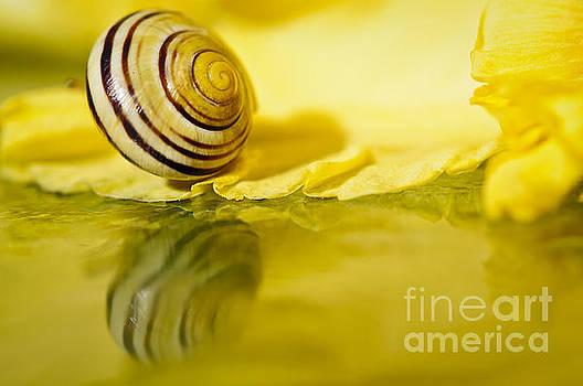 SnailSunshine by Christine Kapler