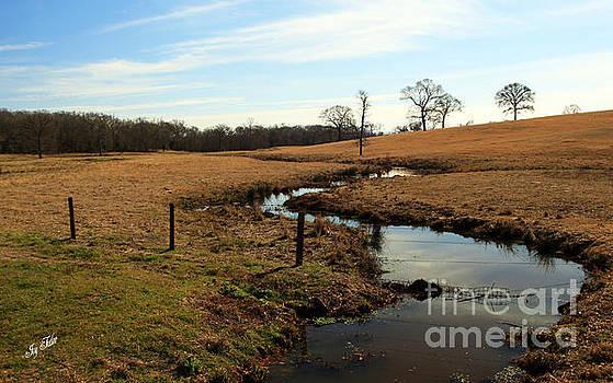 Snake Creek by Joy Tudor