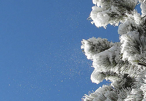 Snow Flakes Against a Blue Sky by Phyllis Britton