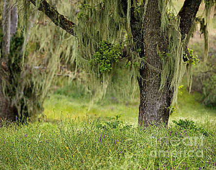 Spanish Moss and Wildflowers by Matt Tilghman