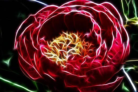 Spirit Of The Flower by Joetta West
