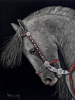Spirited Andalusian by Linda Hiller