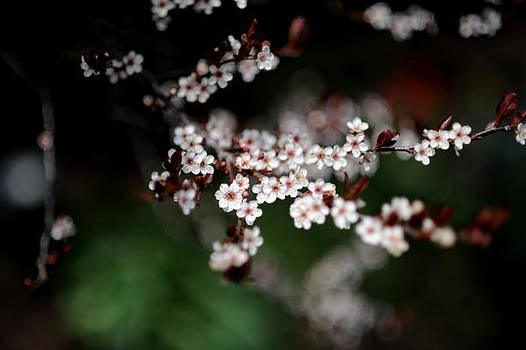 Spring Bloom by Frank DiGiovanni