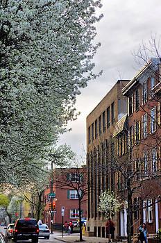 Springtime On Lombard St. by Thomas  MacPherson Jr