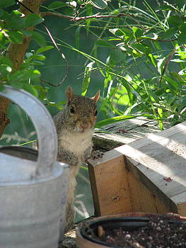 Squirrel Buddy III by Sheila Rodgers