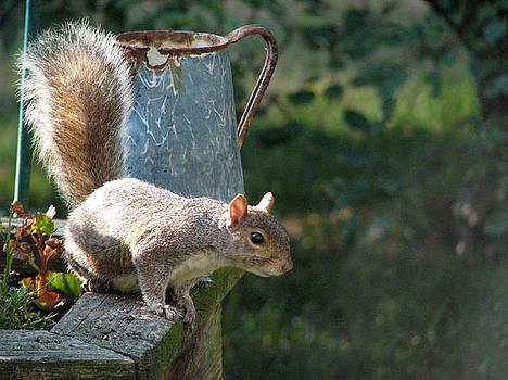 Squirrel Buddy IV by Sheila Rodgers