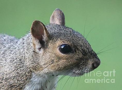 Squirrely Portrait by Theresa Willingham