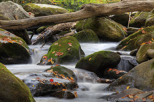 Stream of Thought by Charles Warren