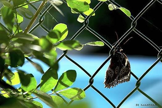 Stubborn Butterfly by Fernanda Mantoan