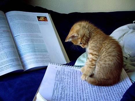 Study Time by KC Moffatt