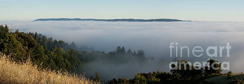 Summer Fog Rolls In by Matt Tilghman
