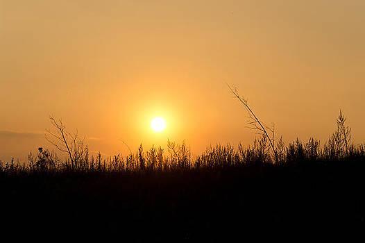 Sun by Daniel Kulinski