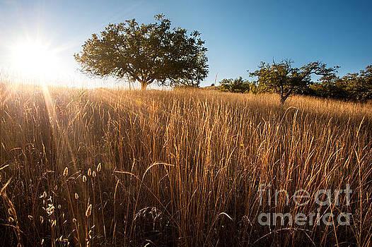Sun-Kissed California Meadow by Matt Tilghman