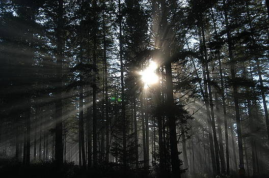 Sun Rays by Wanda Jesfield